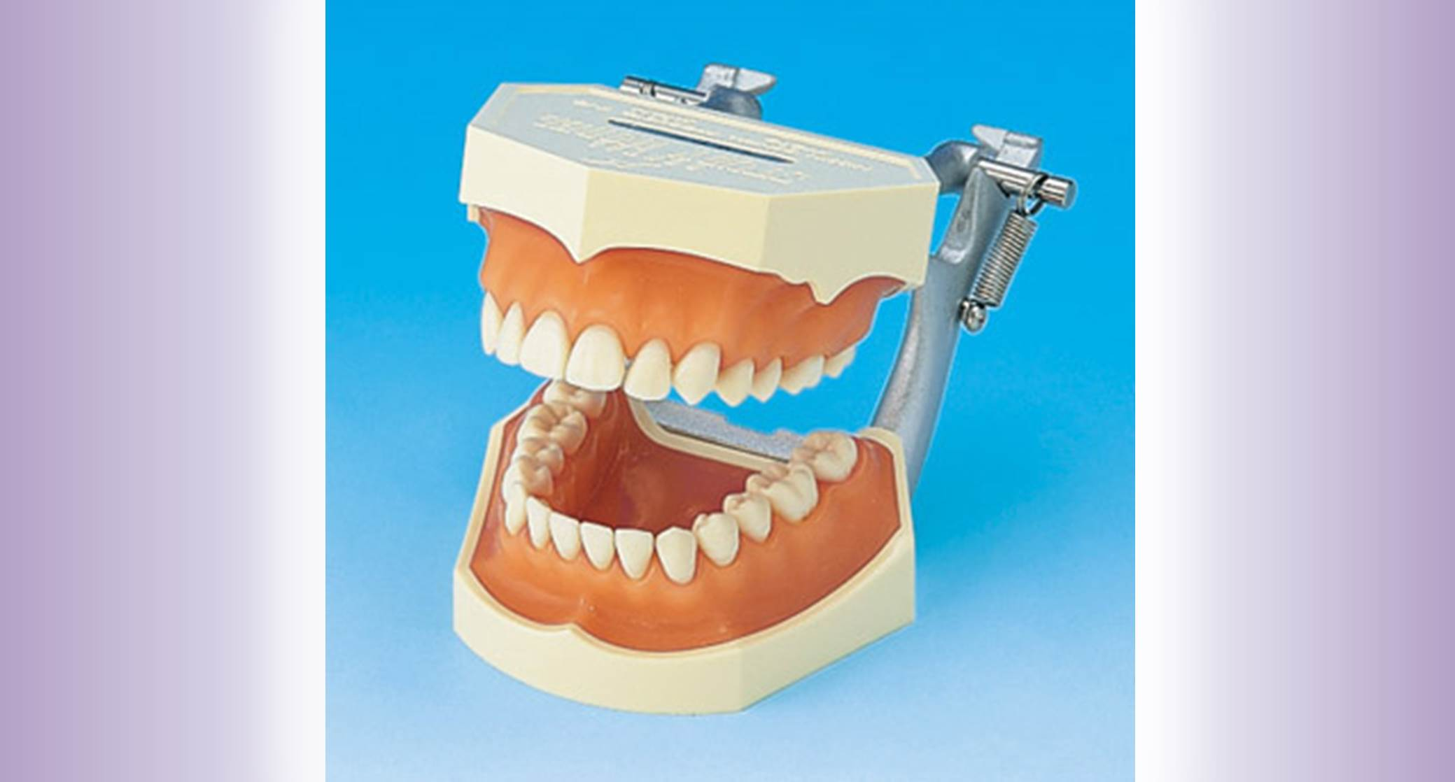 Tooth Anatomy widget